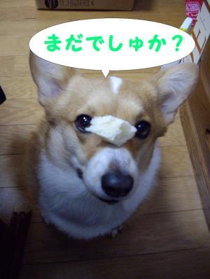 パンと華1