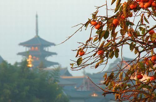 法隆寺と柿