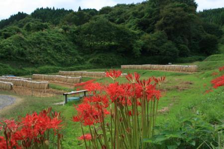 石畑の棚田の秋