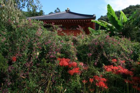 常楽寺の花
