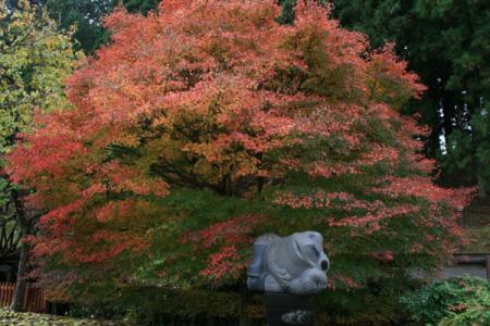 杉並木公園の秋
