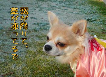 syasin_1208_002