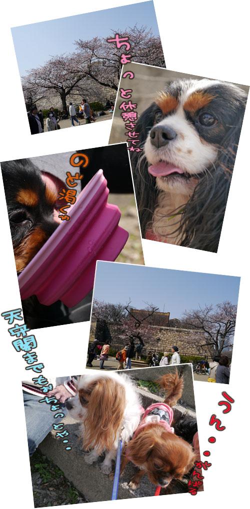 0408b_20120410013858.jpg