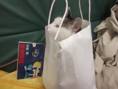 袋の中の猫③