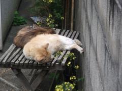 普通の猫の寝方