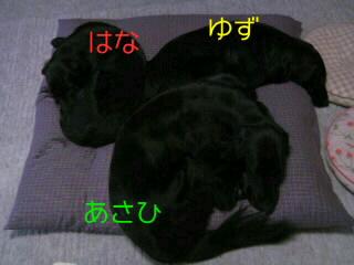 20090524142354.jpg
