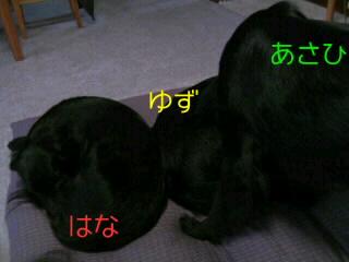 20090524142355.jpg