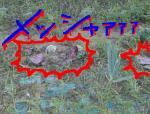 20050831121320.jpg