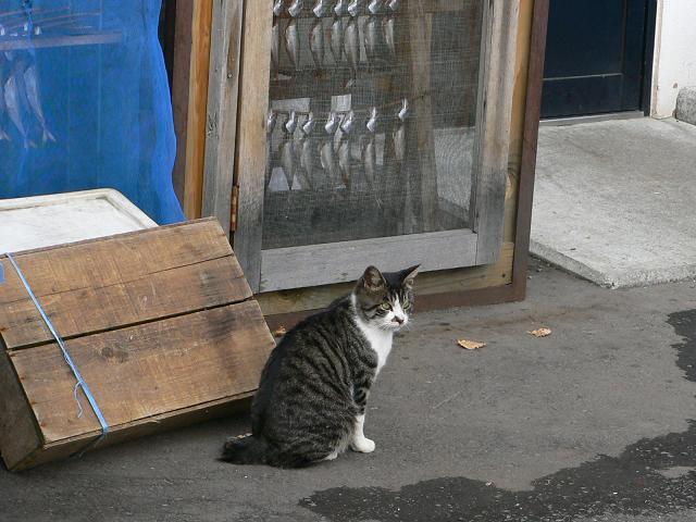 猫vs干物