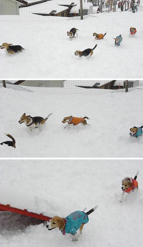 19雪上運動会