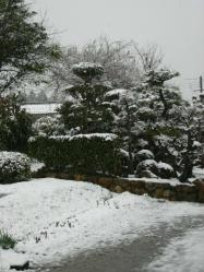 3月9日雪2