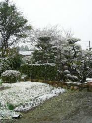 3月9日 雪