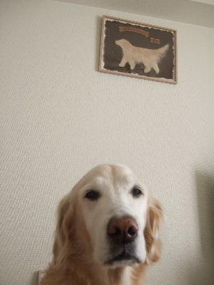 2008_0116wan070087.jpg