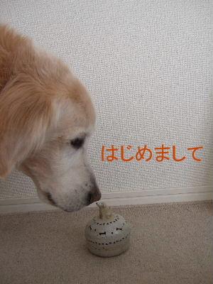 2008_0116wang44.jpg