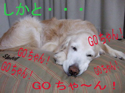 2008_g1.jpg