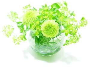 5flower27_300x225.jpg
