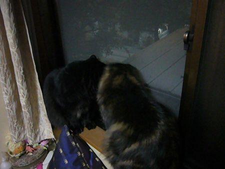 猫だって雪は大好き!