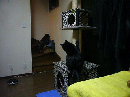 チョロイ猫