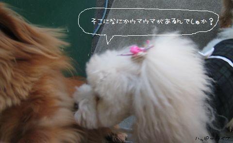 004_20100113222749.jpg
