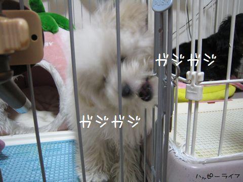 005_20100309101329.jpg