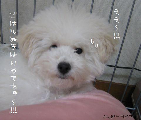 036_20100112181940.jpg