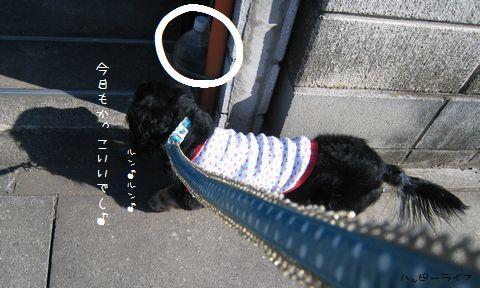 054_20100120210611.jpg