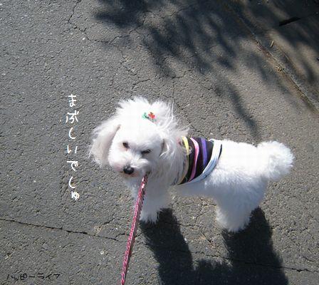 5_20100120210835.jpg