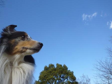 なんて綺麗な空だろう。。。