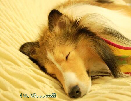 よく眠っています。