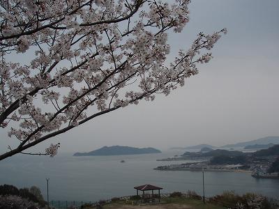 sakura2007.jpg