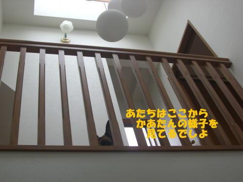 CIMG5545.jpg