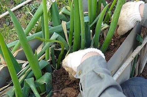 土を綺麗にならします。