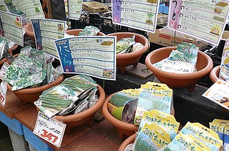 山菜の種や苗売り場♪