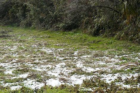 雪が残ってる~♪