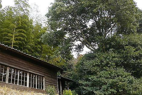 古い建物と大きな木♪