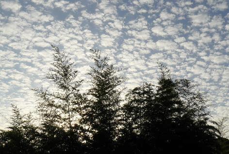 春なのにウロコ雲♪