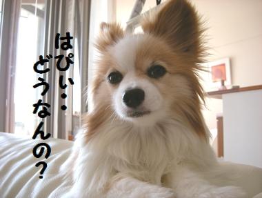 002_20090920114400.jpg