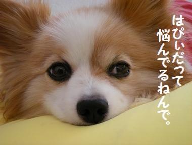 014_20090926113059.jpg
