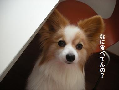 035_20090506115333.jpg