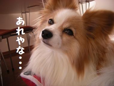 037_20081229183512.jpg