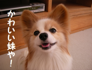 042_20091107140319.jpg