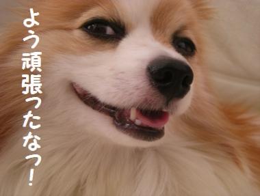 045_20090901105358.jpg