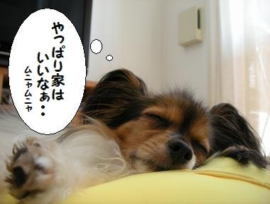 060_20091018130809.jpg