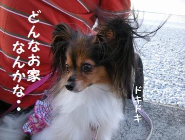 087_20091001232734.jpg