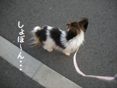 099_20090202183416.jpg