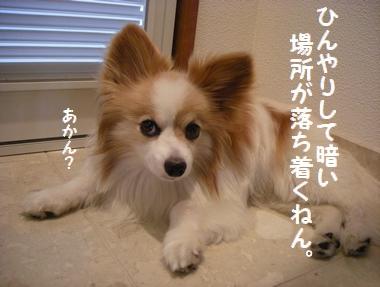 DSCN9314_20090905213712.jpg