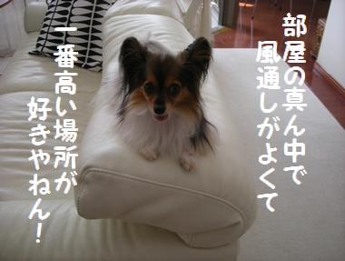 DSCN9329_20090905222145.jpg