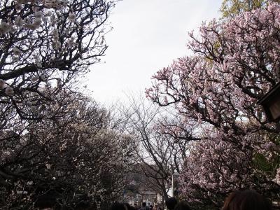 鎌倉 2012・3・20 (96)
