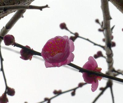 2011_02_08(火)No[136]