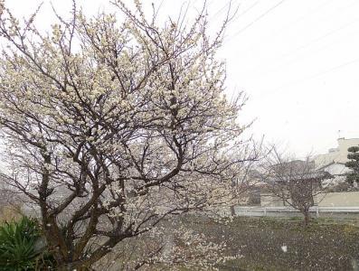 2011_02_12(土)No[229]